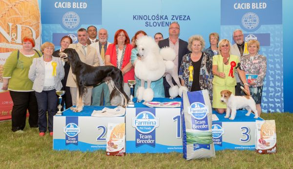 Best in Show (BIS) - Winners of the CACIB Dog Show BLED II (Slovenia), 21 June 2015 (Sunday)