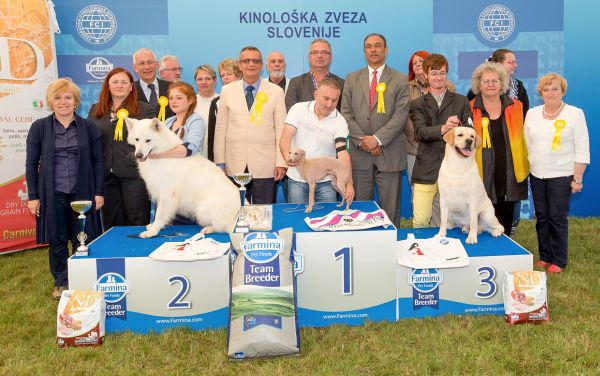 Best in Show (BIS) - Winners of the CACIB Dog Show BLED I (Slovenia), 20 June 2015 (Saturday)
