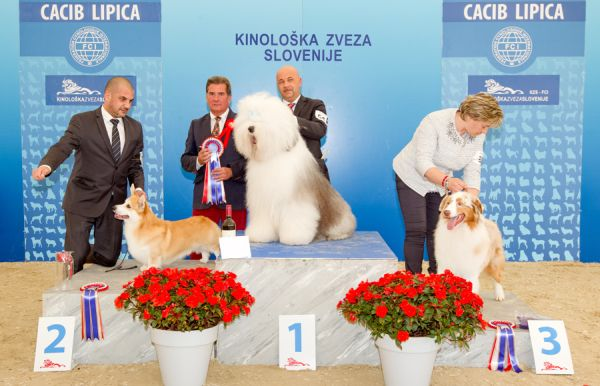 FCI group I - Winners of the International Dog Show CACIB Lipica I (Slovenia), Saturday, 3 October 2015