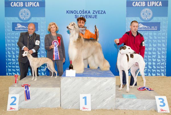 FCI group X - Winners of the International Dog Show CACIB Lipica I (Slovenia), Saturday, 3 October 2015