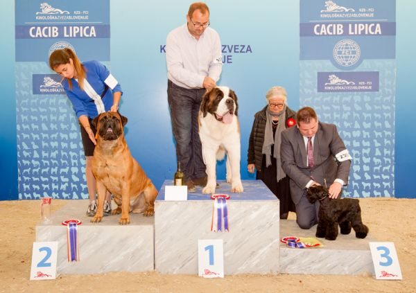 FCI group II - Winners of the International Dog Show CACIB Lipica I (Slovenia), Saturday, 3 October 2015