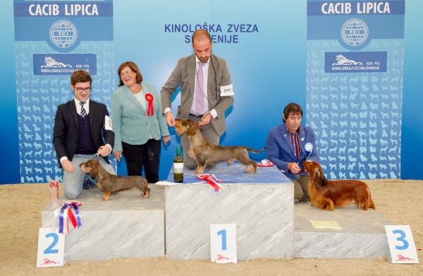 FCI group IV - Winners of the International Dog Show CACIB Lipica I (Slovenia), Saturday, 3 October 2015