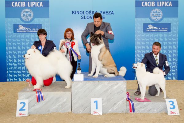 FCI group V - Winners of the International Dog Show CACIB Lipica I (Slovenia), Saturday, 3 October 2015