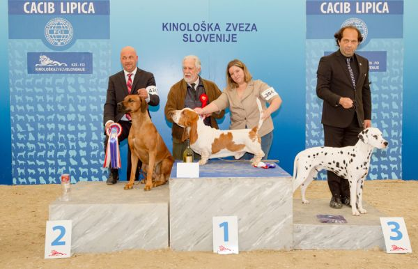FCI group VI - Winners of the International Dog Show CACIB Lipica I (Slovenia), Saturday, 3 October 2015