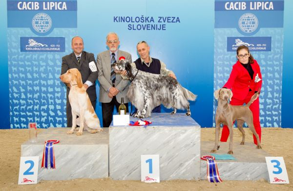 FCI group VII - Winners of the International Dog Show CACIB Lipica I (Slovenia), Saturday, 3 October 2015