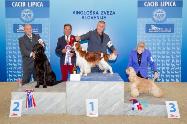 FCI group VIII - Winners of the International Dog Show CACIB Lipica I (Slovenia), Saturday, 3 October 2015