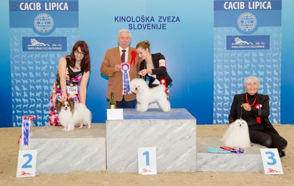 FCI group IX - Winners of the International Dog Show CACIB Lipica I (Slovenia), Saturday, 3 October 2015