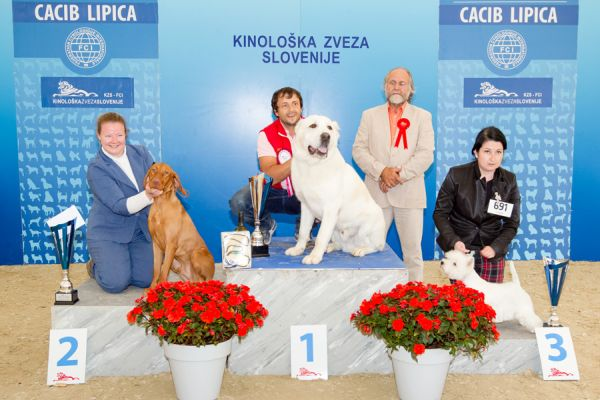 Best Junior  - Winners of the International Dog Show CACIB Lipica I (Slovenia), Saturday, 3 October 2015