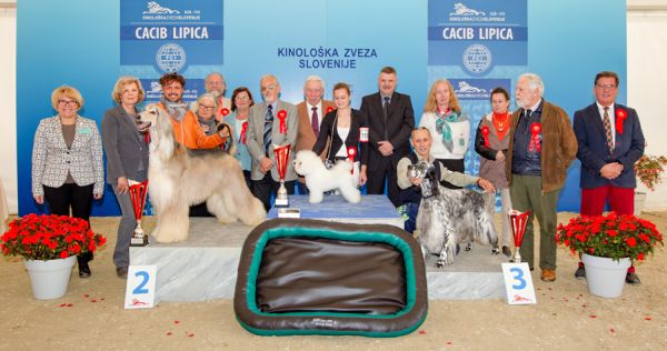Best in Show (BIS) - Winners of the International Dog Show CACIB Lipica I (Slovenia), Saturday, 3 October 2015