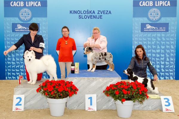 Best Baby - Winners of the International Dog Show CACIB Lipica I (Slovenia), Saturday, 3 October 2015
