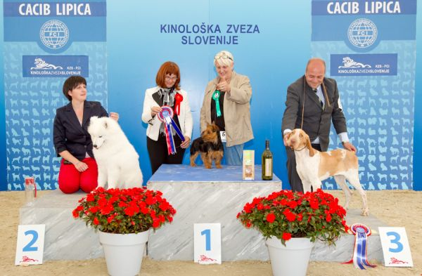 Best Puppy - Winners of the International Dog Show CACIB Lipica I (Slovenia), Saturday, 3 October 2015