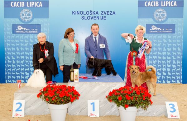 Best Veteran - Winners of the International Dog Show CACIB Lipica I (Slovenia), Saturday, 3 October 2015