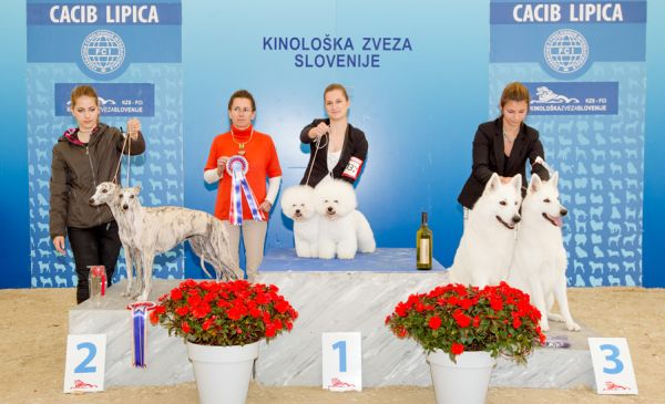 Best Brace - Winners of the International Dog Show CACIB Lipica I (Slovenia), Saturday, 3 October 2015