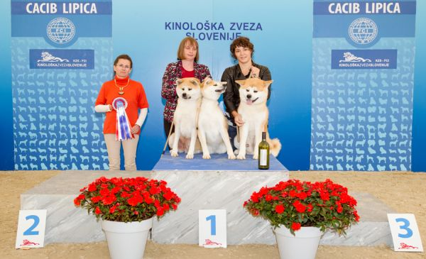 Best Breeders' Group - Winners of the International Dog Show CACIB Lipica I (Slovenia), Saturday, 3 October 2015