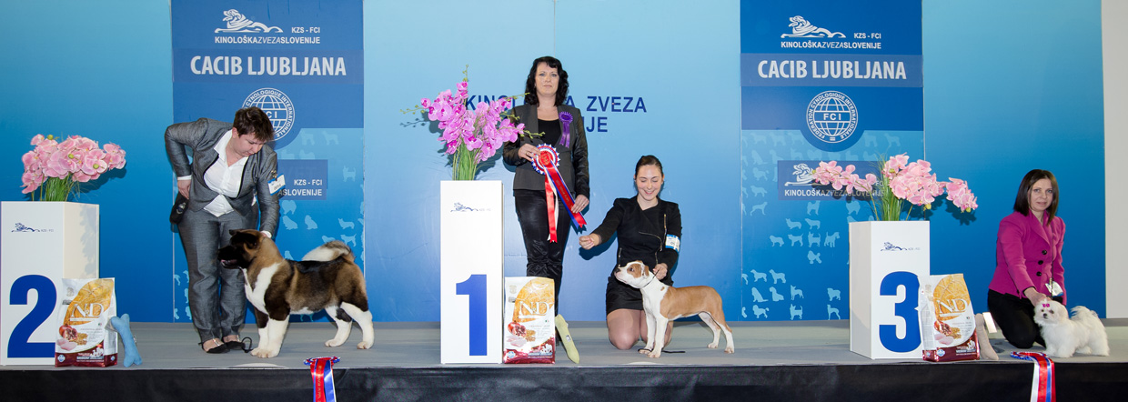 Best Minor Puppy - Winners of the International Dog Show Ljubljana 2 (Slovenia), Sunday, 17 January 2016 (BIS photo)