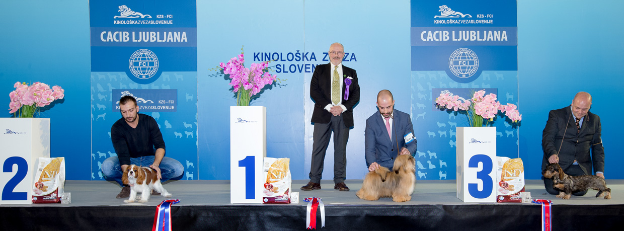 Best Puppy - Winners of the International Dog Show Ljubljana 2 (Slovenia), Sunday, 17 January 2016 (BIS photo)