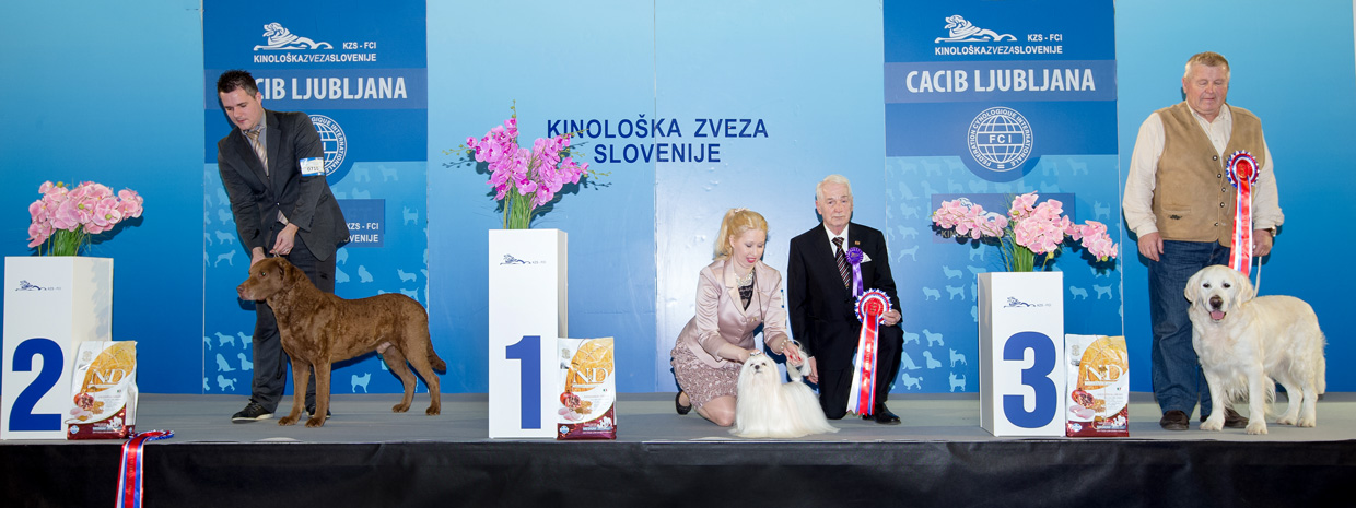 Best Veteran - Winners of the International Dog Show Ljubljana 2 (Slovenia), Sunday, 17 January 2016 (BIS photo)