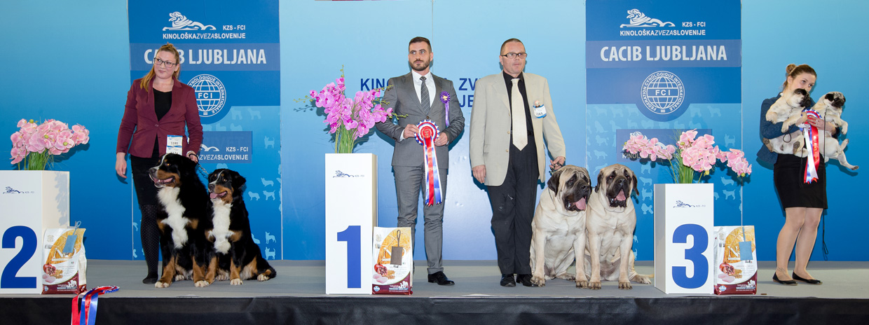 Best Brace - Winners of the International Dog Show Ljubljana 2 (Slovenia), Sunday, 17 January 2016 (BIS photo)