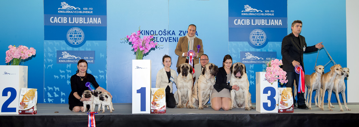 Best Breeders' Group - Winners of the International Dog Show Ljubljana 2 (Slovenia), Sunday, 17 January 2016 (BIS photo)
