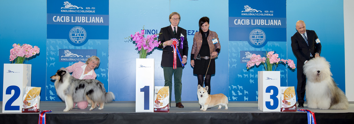 FCI group I - Winners of the International Dog Show Ljubljana 2 (Slovenia), Sunday, 17 January 2016 (BIS photo)