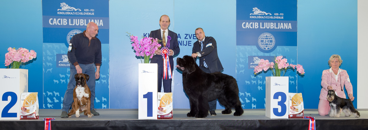 FCI group II - Winners of the International Dog Show Ljubljana 2 (Slovenia), Sunday, 17 January 2016 (BIS photo)