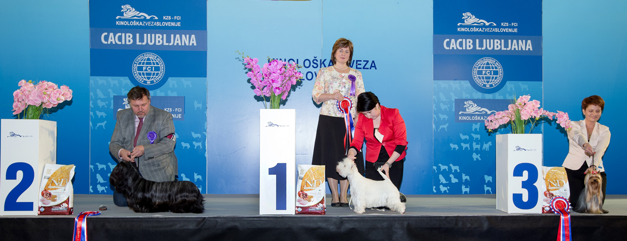 FCI group III - Winners of the International Dog Show Ljubljana 2 (Slovenia), Sunday, 17 January 2016 (BIS photo)