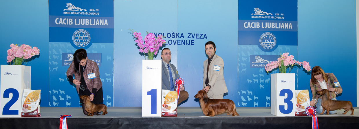 FCI group IV - Winners of the International Dog Show Ljubljana 2 (Slovenia), Sunday, 17 January 2016 (BIS photo)