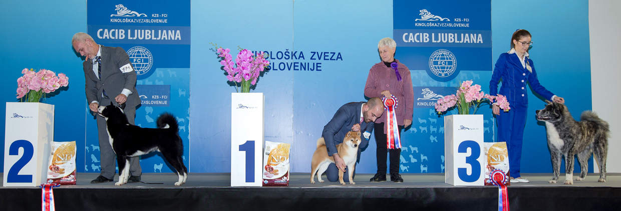 FCI group V - Winners of the International Dog Show Ljubljana 2 (Slovenia), Sunday, 17 January 2016 (BIS photo)