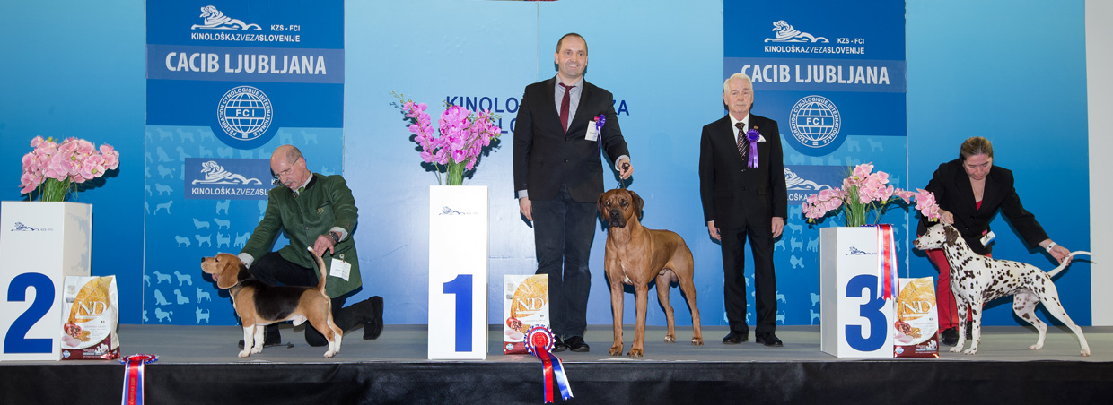 FCI group VI - Winners of the International Dog Show Ljubljana 2 (Slovenia), Sunday, 17 January 2016 (BIS photo)