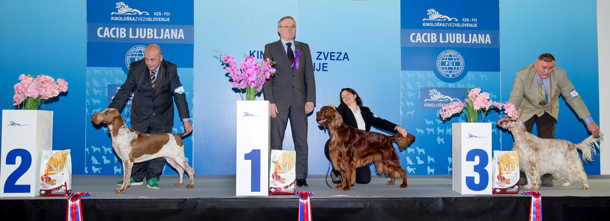 FCI group VII - Winners of the International Dog Show Ljubljana 2 (Slovenia), Sunday, 17 January 2016 (BIS photo)