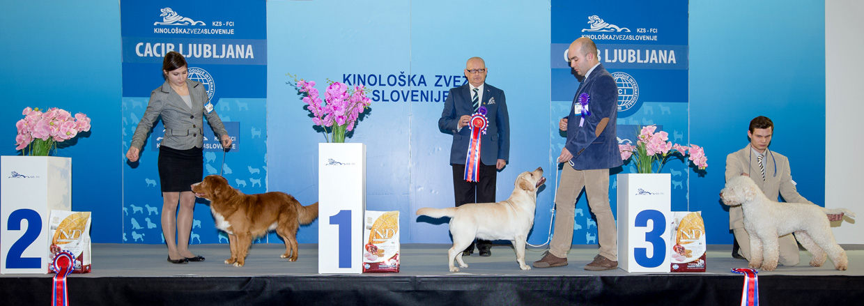 FCI group VIII - Winners of the International Dog Show Ljubljana 2 (Slovenia), Sunday, 17 January 2016 (BIS photo)