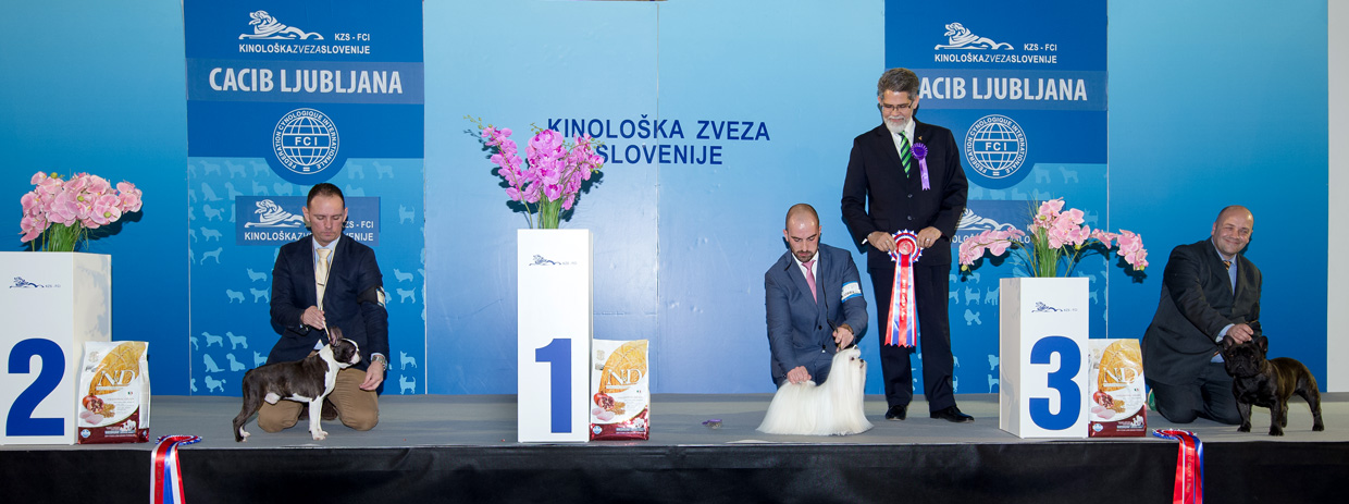 FCI group IX - Winners of the International Dog Show Ljubljana 2 (Slovenia), Sunday, 17 January 2016 (BIS photo)