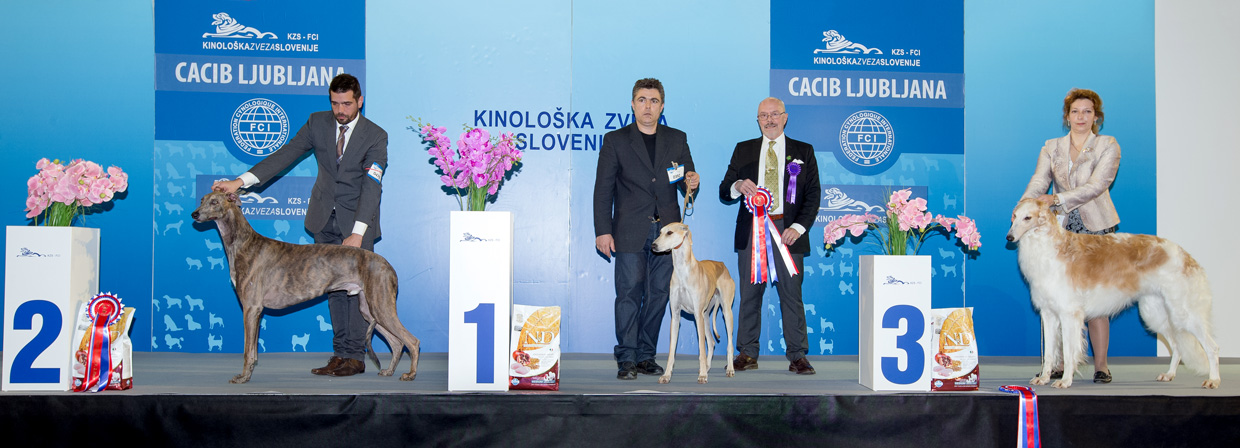 FCI group X - Winners of the International Dog Show Ljubljana 2 (Slovenia), Sunday, 17 January 2016 (BIS photo)