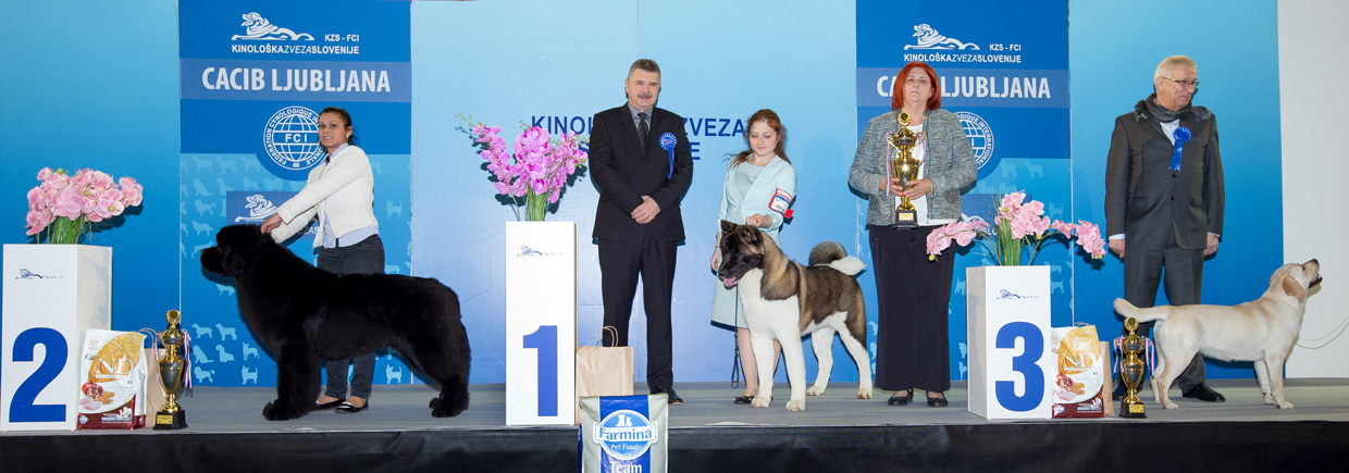 Best Junior - Winners of the International Dog Show Ljubljana 2 (Slovenia), Sunday, 17 January 2016 (BIS photo)