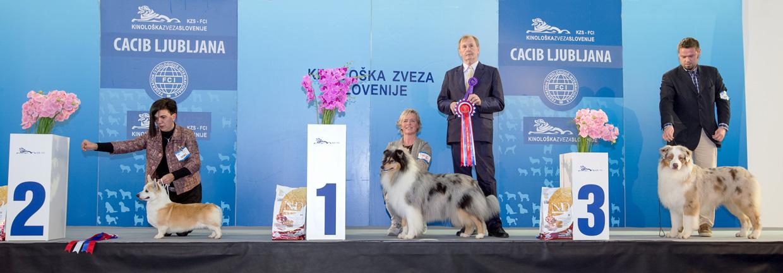 Группа FCI I - Победители Международной выставки собак Любляна 1 (Словения), суббота, 16 января 2016 (BIS фото)