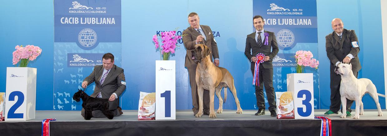 Группа FCI II - Победители Международной выставки собак Любляна 1 (Словения), суббота, 16 января 2016 (BIS фото)