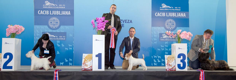 Группа FCI III - Победители Международной выставки собак Любляна 1 (Словения), суббота, 16 января 2016 (BIS фото)