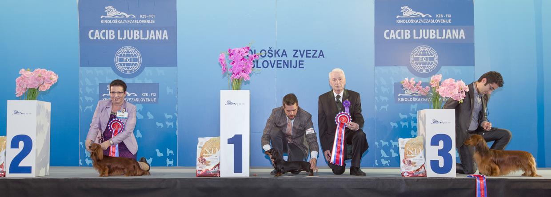 Группа FCI IV - Победители Международной выставки собак Любляна 1 (Словения), суббота, 16 января 2016 (BIS фото)