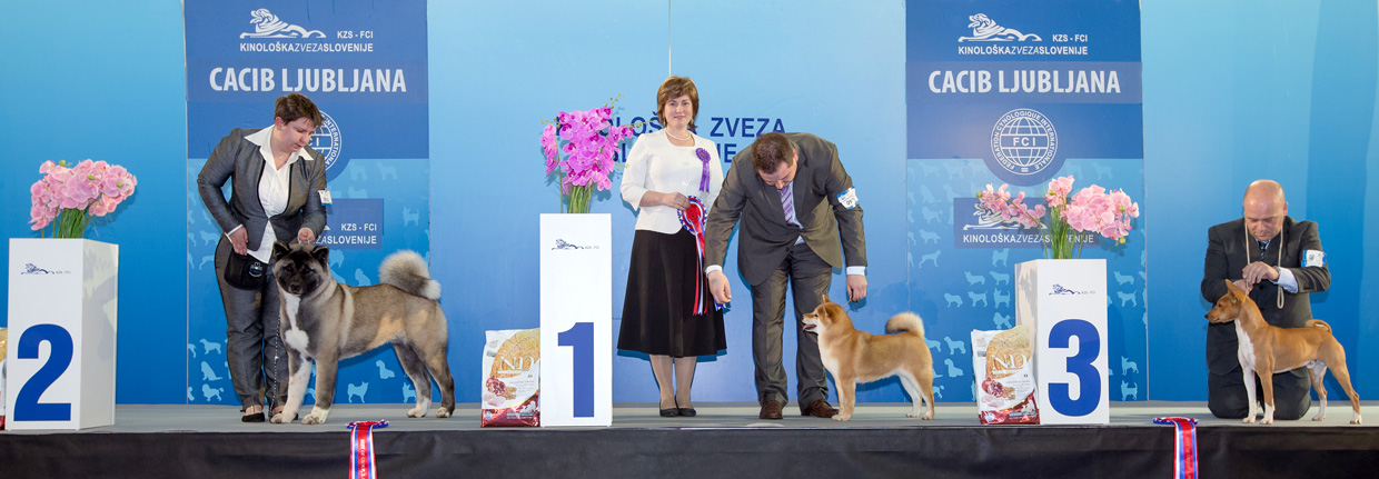 FCI group V - Winners of the International Dog Show Ljubljana 1 (Slovenia), Saturday, 16 January 2016 (BIS photo)