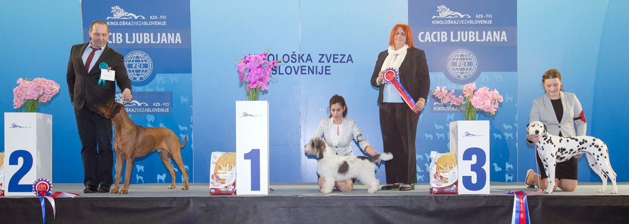 FCI group VI - Winners of the International Dog Show Ljubljana 1 (Slovenia), Saturday, 16 January 2016 (BIS photo)