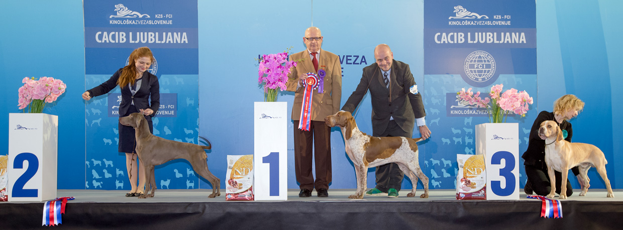 FCI group VII - Winners of the International Dog Show Ljubljana 1 (Slovenia), Saturday, 16 January 2016 (BIS photo)