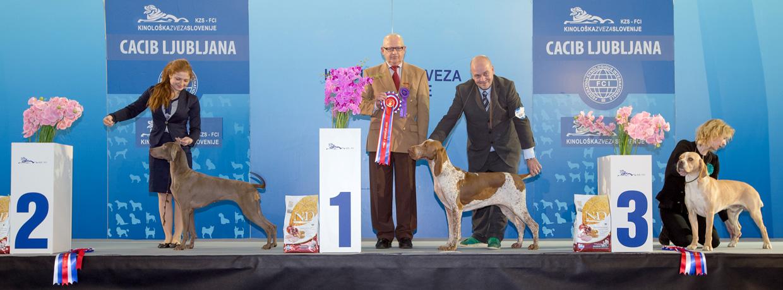 Группа FCI VII - Победители Международной выставки собак Любляна 1 (Словения), суббота, 16 января 2016 (BIS фото)