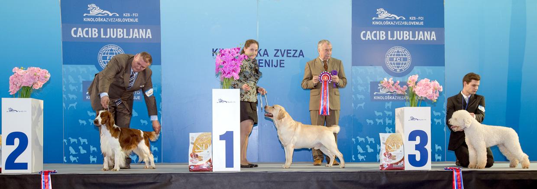 Группа FCI VIII - Победители Международной выставки собак Любляна 1 (Словения), суббота, 16 января 2016 (BIS фото)