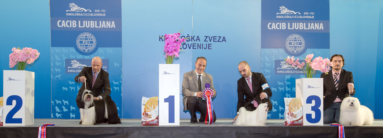 FCI group IX - Winners of the International Dog Show Ljubljana 1 (Slovenia), Saturday, 16 January 2016 (BIS photo)