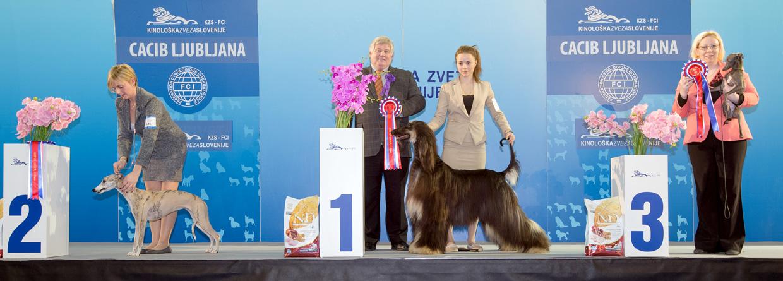 Группа FCI X - Победители Международной выставки собак Любляна 1 (Словения), суббота, 16 января 2016 (BIS фото)