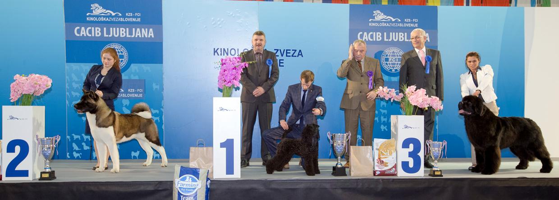 Лучший юниор - Победители Международной выставки собак Любляна 1 (Словения), суббота, 16 января 2016 (BIS фото)