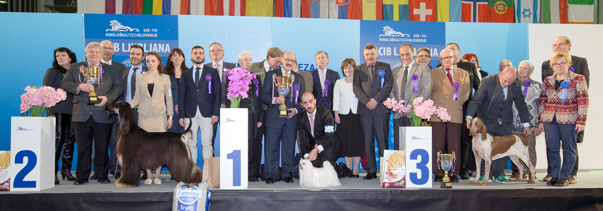 Best in Show (BIS) - Winners of the International Dog Show Ljubljana 1 (Slovenia), Saturday, 16 January 2016 (BIS photo)
