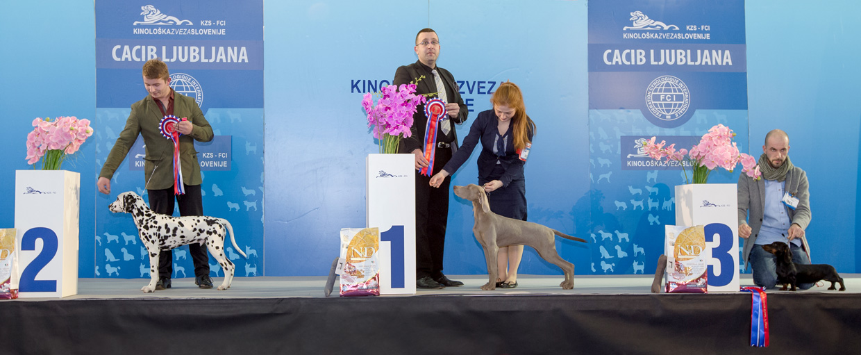 Best Minor Puppy - Winners of the International Dog Show Ljubljana 1 (Slovenia), Saturday, 16 January 2016 (BIS photo)