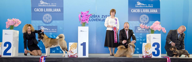Лучший щенок - Победители Международной выставки собак Любляна 1 (Словения), суббота, 16 января 2016 (BIS фото)