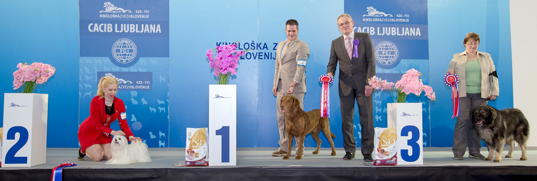 Лучший ветеран - Победители Международной выставки собак Любляна 1 (Словения), суббота, 16 января 2016 (BIS фото)